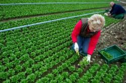 Elementul ecologic în politica agricol? comun? este vital pentru mediu, s?n?tate ?i economie