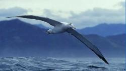 Plan de acţiune pentru soluţionarea problemei capturilor accidentale de păsări marine în uneltele de pescuit