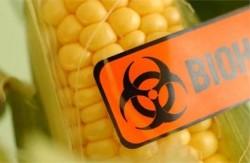Comisia Europeană propune autorizarea importurilor de OMG-uri în UE, în ciuda opoziției statelor membre