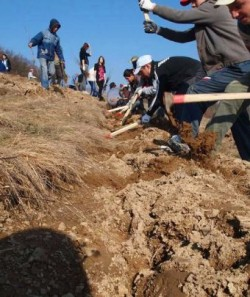 Voluntarii Fundaţiei Tăşuleasa Social îşi propun să planteze 25 de mii de puieţi