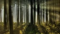 Finalizarea proiectului elvetiano-roman de gestionare durabila a ecosistemelor forestiere