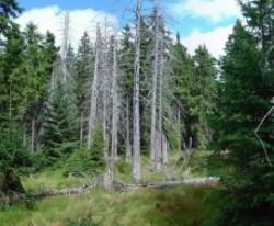 Vişeu de Sus: Suprafeţe fără pădure sau viceversa