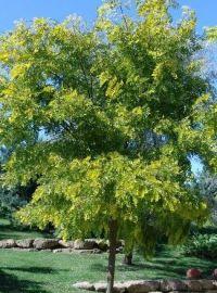10.00 de copaci plantati la capatul Bulevardului Muncii