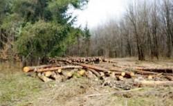 Amărîtul cu un vreasc furat, tot una cu cel ce fură pădurea