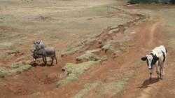 Concurs de selectare a unei companii pentru elaborarea unui studiu privind eroziunea solului