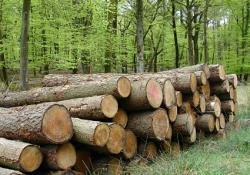 1.000.000 de arbori taiati anual de austriecii de la Schweighofer – activitate fara impact asupra mediului, potrivit Agentiei pentru Protectia Mediului Covasna