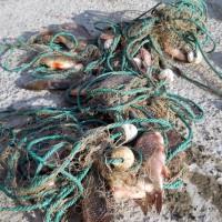 Dosare penale pe numele unor braconieri, peste si bunuri confiscate in valoare de 25.000 de lei, in Delta Dunarii