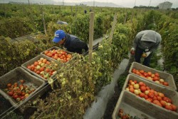 Muntenii de pe Valea Buzaului invata cum sa faca agricultura ecologica pe bani europeni