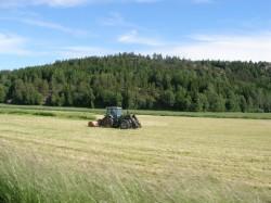 Sectorul agriculturii ecologice din Romania are un ritm mediu anual de crestere de 23%