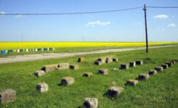 """Elena Dumitru, MMSC: """"Prioritatea noastra este implementarea conceptului de agricultura durabila"""""""