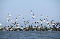 Ziua Biodiversitatii, sarbatorita miercuri la nivel international