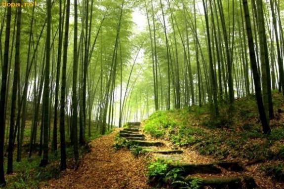"""Prezentatorul """"Wild Carpathia"""", indragostit de Romania: P?durea este cea mai important? avere a României, nu lemnul."""