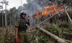 Sute de hectare de coca, distruse într-un parc naţional