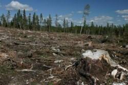 Petrom defriseaza hectare de padure pentru foraje de explorare