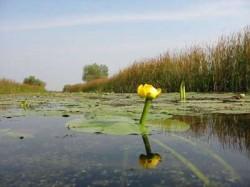 Microdelte, pe 16% din lungimea cursului Dunarii. Proiectul a fost prezentat Guvernului