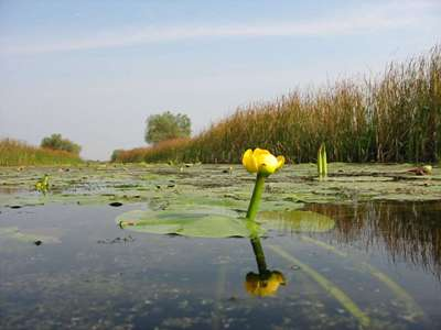 Un nou pas în realizarea Strategiei Deltei Dun?rii: Banca Mondial? a prezentat raportul de diagnostic