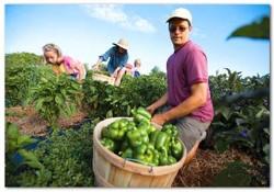 Model de dezvoltare rurala durabila prin aplicarea resurselor alternative de energie