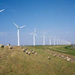 Vesti bune pentru parcurile eoliene: trei zile de vant puternic la Constanta