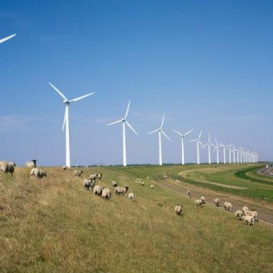 Num?rul dosarelor privind acreditarea generatoarelor eoliene a cunoscut o substan?ial? reducere