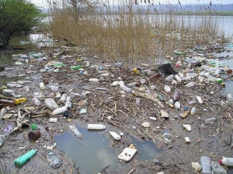 Dunarea, in pragul unui dezastru ecologic. Luciul apei nu se mai vede din cauza deseurilor