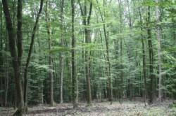 Fondul forestier de stat s-a redus cu 17% in zece ani