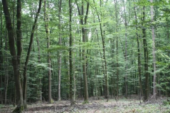 Fondul forestier de stat s-a redus cu 17% în zece ani