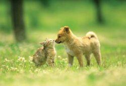 Amenzi de pana la 500 de lei pentru cei care nu curata dupa animale de companie