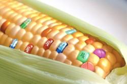 Top 10 alimente modificate genetic. Acum şi cu gene umane!
