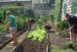 """Asociaţia Slow Food Turda crează o grădină de legume şi plante, în cadrul proiectului """"Gustos şi sănătos"""""""