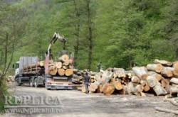 Taieri ilegale de arbori, paguba de milioane de euro