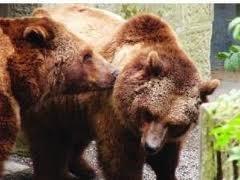 Ursii bruni si lupii din Muntii Apuseni, protejati printr-un proiect din Marea Britanie