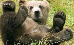 Administratorii fondurilor cinegetice vor fi obligaţi să asigure hrana animalelor sălbatice, respectiv urs, lup, râs şi pisică sălbatică