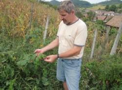 Un vis împlinit: Familia Schuster a pus pe picioare o fermă ecologică şi a înfiinţat o cooperativă în inima Ardealului