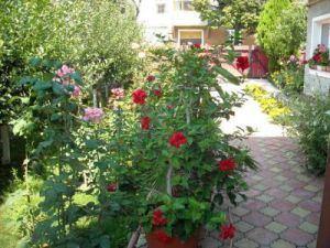 Prim?ria Bistri?a premiaz? cele mai frumoase gr?dini ?i balcoane cu flori