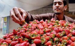 Căpșunile protejează stomacul