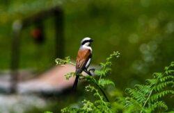 Petitie pentru Parcul National Defileul Jiului