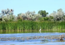 Mediul si pescuitul din Delta Dunarii pe agenda Comisiei Europene