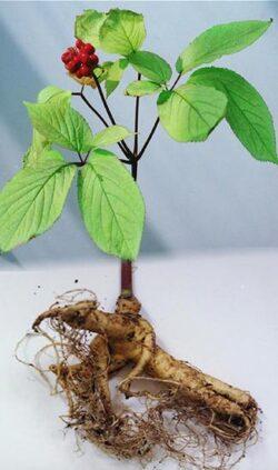 Sanatatea ta: 6 suplimente alimentare naturale care iti dau mai multa energie