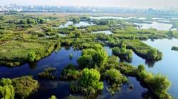 Delta din Bucuresti, primul parc natural urban