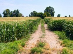 Este oficial: S-a dat liber la cultivarea plantelor modificate genetic in ariile protejate de interes comunitar, sit Natura 2000