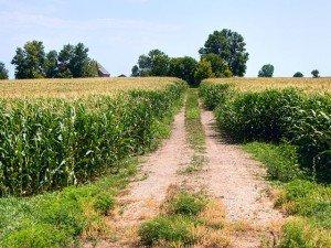 Noile reguli din comertul cu produse modificate genetic vor distruge ideea de piata unica a UE