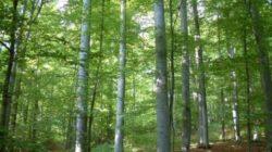 Padurar din Horea, cercetat pentru neglijenta in serviciu, dupa ce au fost descoperite taieri ilegale de arbori