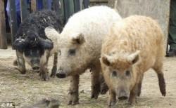Parlamentarii europeni au reglementat timpul de transport a animalelor