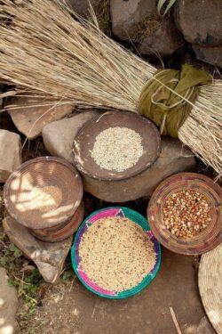 Soiurile traditionale ar putea disparea de pe piata, daca UE interzice vanzarea semintelor traditionale