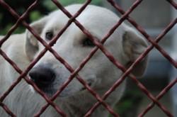 Echipele de medici veterinari din cadrul Primariei Sectorului 2 iti pot steriliza gratis cainele!