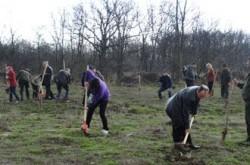 Consiliul Judetean Tulcea planuieste sa impadureasca peste o mie de hectare