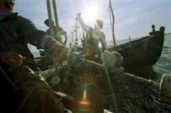 Somnul, știuca, șalăul și crapul din Delta Dunării nu vor mai putea fi luați acasă de pescari