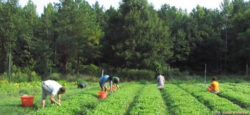 Agricultura ecologica trebuie sustinuta mai mult
