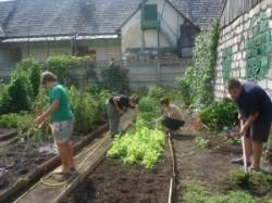 Subventii pentru agricultura eco din fonduri europene in faloare de 4.098.000 euro.