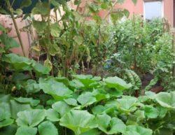 Ajutoare pentru agricultura ecologica in Ialomita